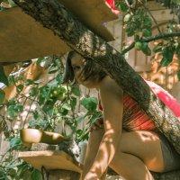 """""""домик"""" на дереве :: Александр Астапов"""