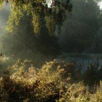 Утро в старом парке :: Юрий Цыплятников