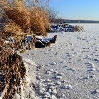 Студёный пейзаж :: Ольга