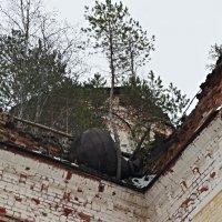 Лес тут везде, даже на крыше :: Елена Смолова