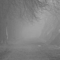 Липовая аллея в тумане :: Lesya Vi