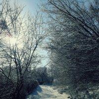 Зимнее утро :: Кэтрин Кондрашева