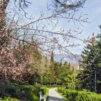 Ливадия Весной :: Варвара