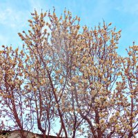 Весна ....всё цветёт!!! :: Юрий Владимирович