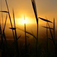 Прощание с солнцем :: Lina Liber