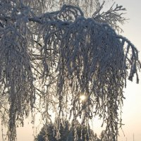 Ещё любуемся Зимой! :: Татьяна Аистова