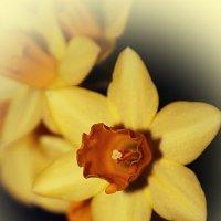 Дарите женщинам цветы... :: Tatiana Markova