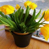 почувствуйте весну!!! :: Марина Харченкова