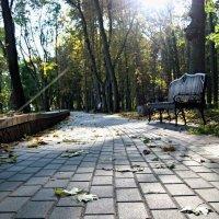 парк :: Екатерина Потапова