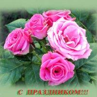 С праздником... :: Тамара (st.tamara)