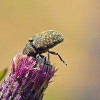 Страус мира насекомых :: Алексей Дмитриев
