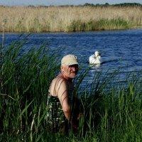 О лебедях... :: Анатолий Мартынюк