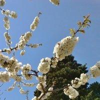 Весна.... :: СветЛана D