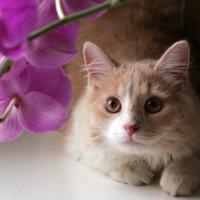 Есть где-то Кошачья Планета... :: Наталья Чебыкина