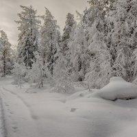 Холодный январь :: vladimir