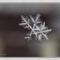 Снежинищи :: Маргарита N