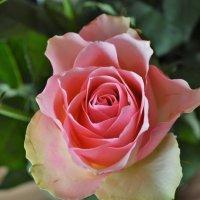 Роза.. :: Schbrukunow Gennadi
