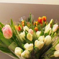 Эти цветы для нас, девушки! С праздником! :: Фотогруппа Весна.