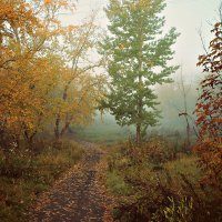 Осень :: Елена Пономарева