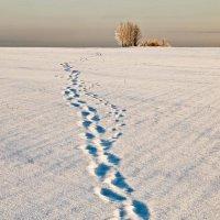 Одиноко идущий :: Игорь Кожухов