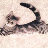 cat :: Yana S