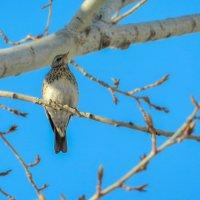 Птица :: Алексей Масалов
