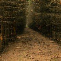 Дремучий лес :: EDO Бабурин