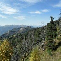 На горных лесных склонах :: Сергей Анатольевич