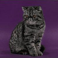 Прошу любить и жаловать-из серии Кошки очарование мое! :: Shmual & Vika Retro