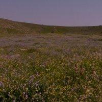 цветущая пустыня :: venera