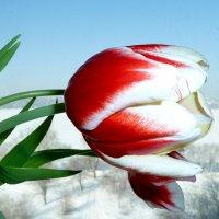 В ожидании весны. :: Чария Зоя