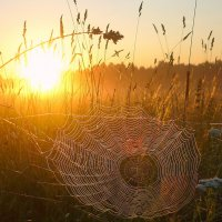 Колыбель для солнца :: Павлова Татьяна Павлова