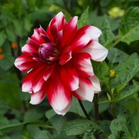 Цветок :: Алексей Жуков