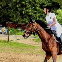 Моя любовь - лошади! :: Дмитрий Пислигин