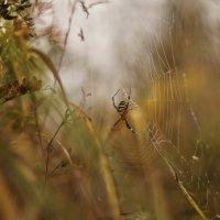 Осенний :: sorovey Sol