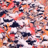 Зимние ягоды :: Алексей Дмитриев