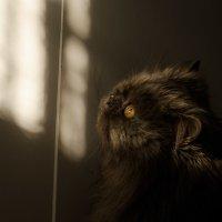 И до кота добрался ) :: Антон Simonov
