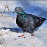 999 :: linnud