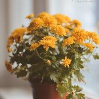 цветы для мамы :: Юлия Богданова