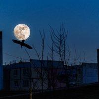 Светила полная луна... :: Анатолий Клепешнёв