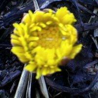 Весна :: Миша Любчик