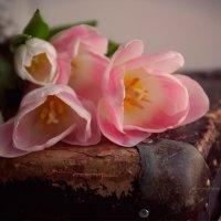 Тюльпаны :: Вера Шамраева