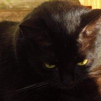 Кошка, которая держит себя в черном теле :: Андрей Лукьянов