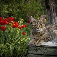 В саду :: Евгений Лимонтов