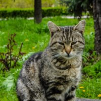 Серьезное животное=) :: Vladislava Ozerova