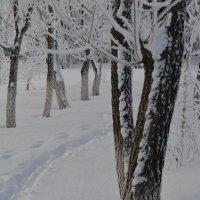 Последний  снегопад. :: Марина