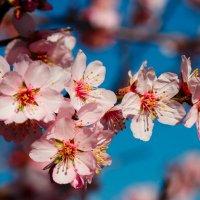 Весна! :: Alexander Samofalov