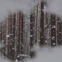 прощальный взгляд на зиму :: Евгения Куприянова