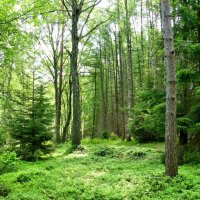 Катынский лес :: Милешкин Владимир Алексеевич