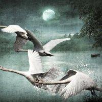 swans :: dex66